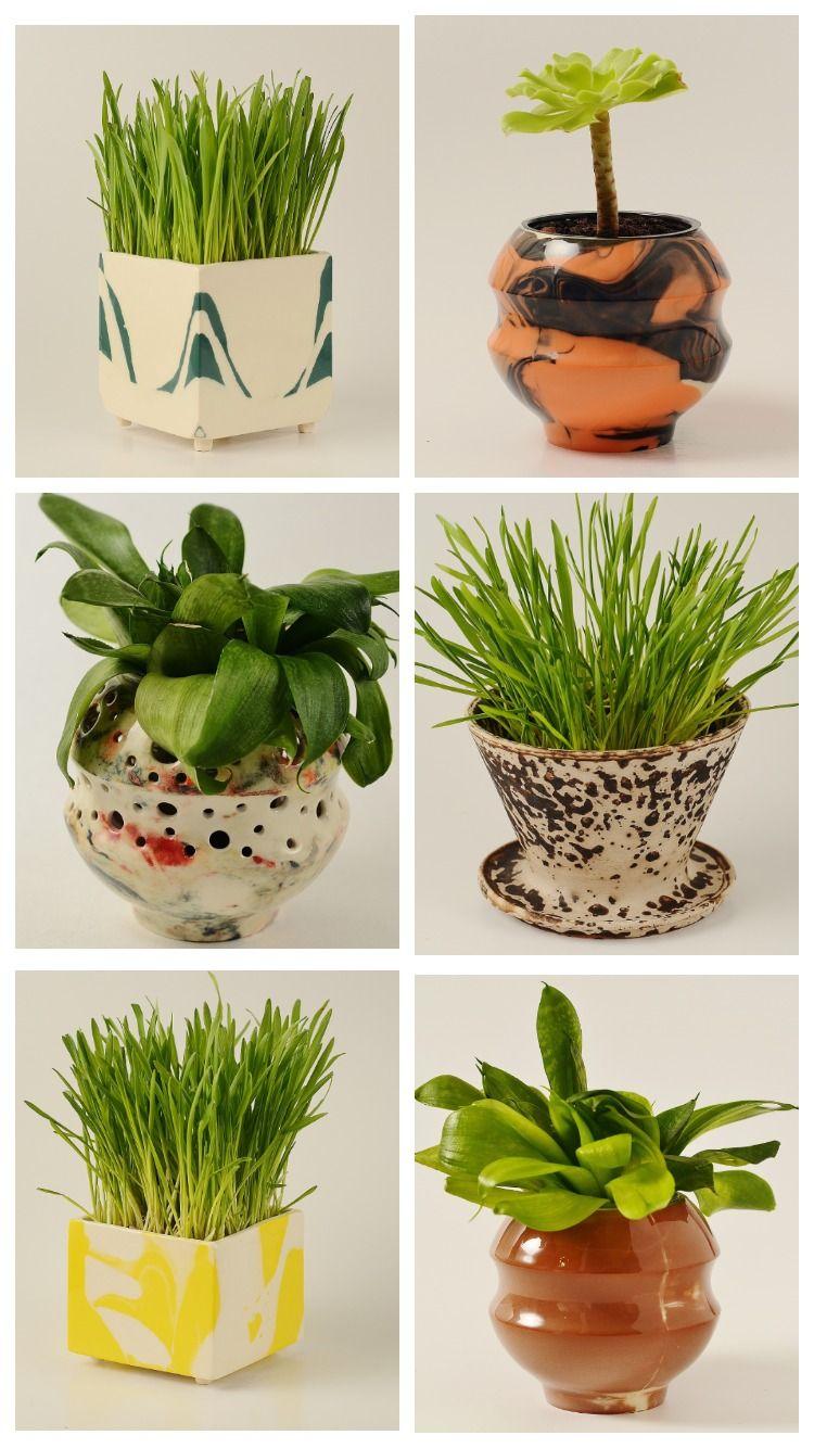 Succulent Pot Succulent Planters Succulent Planter Ideas Succulent Pots Cactus Pot Ideas Cactus Pot Small Potted Plants Plant Pot Decoration Plant Pot Diy