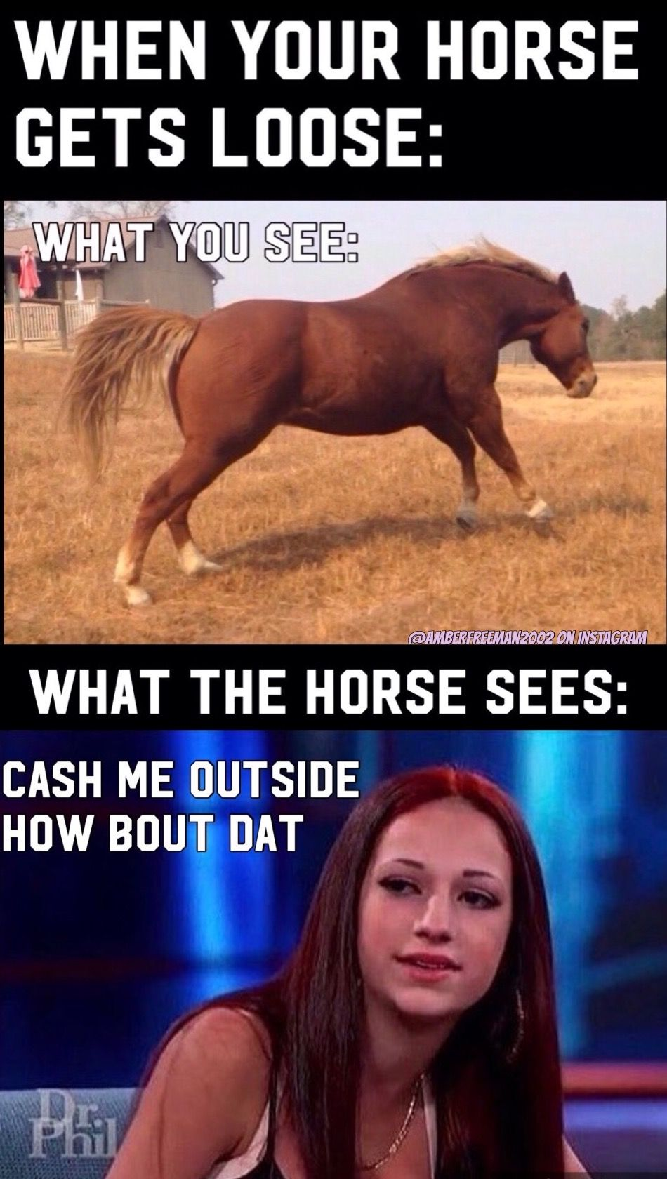 0bb2d931900151e98e9c9667289be2fa cash me outside how bout dat cowgirl mania pinterest memes