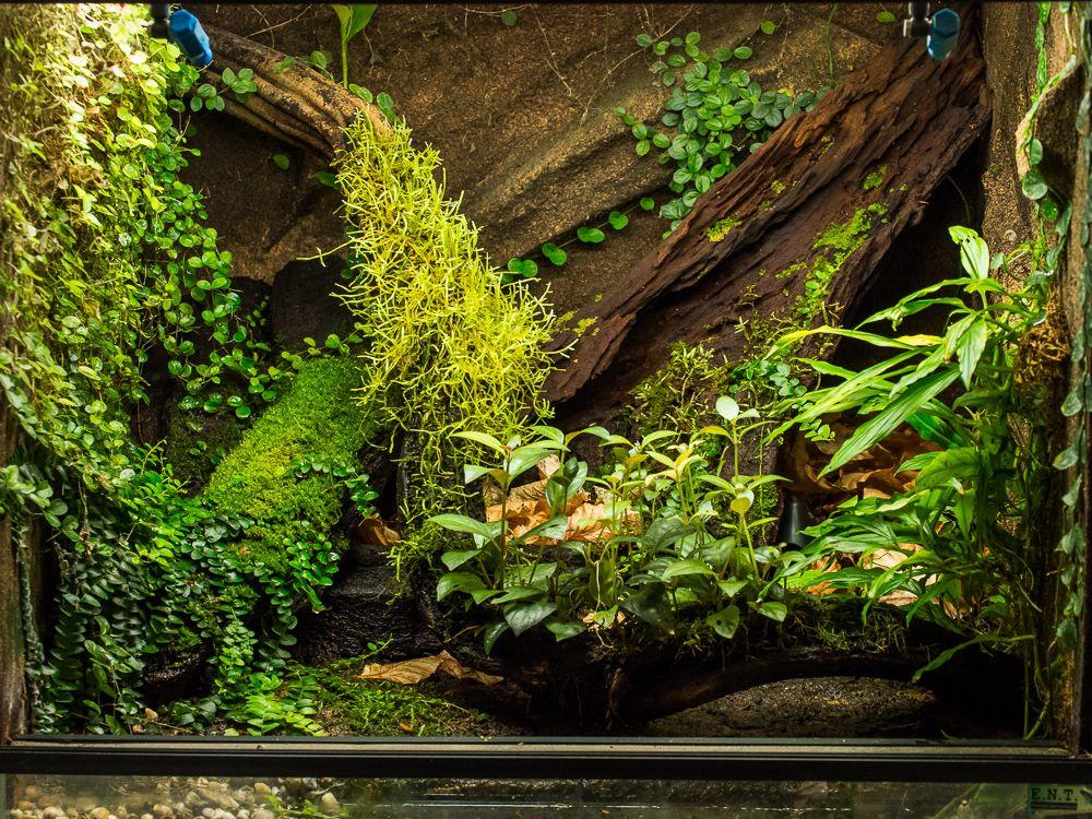 vivarium crested geckos vivariums pinterest reptilien. Black Bedroom Furniture Sets. Home Design Ideas