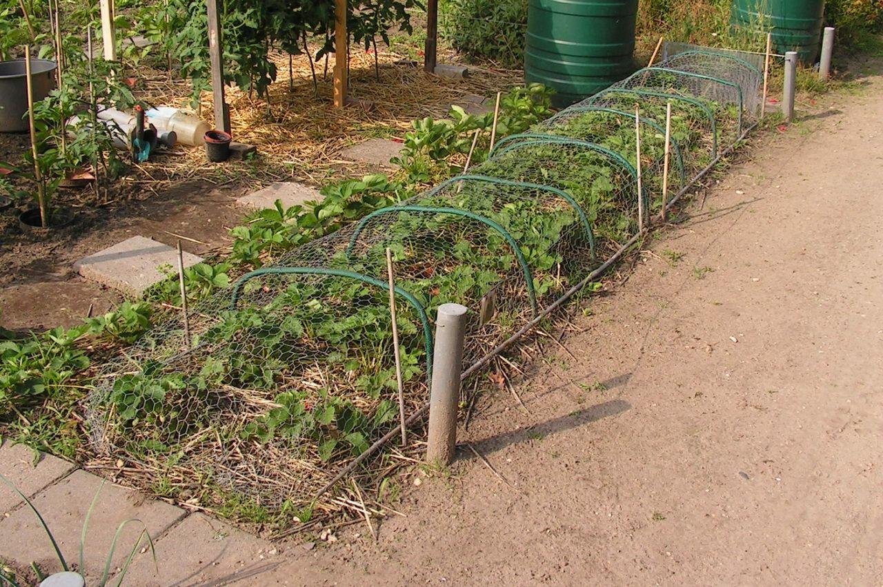Fruit Cages Garden Netting Fruit Cage Vegetable Garden
