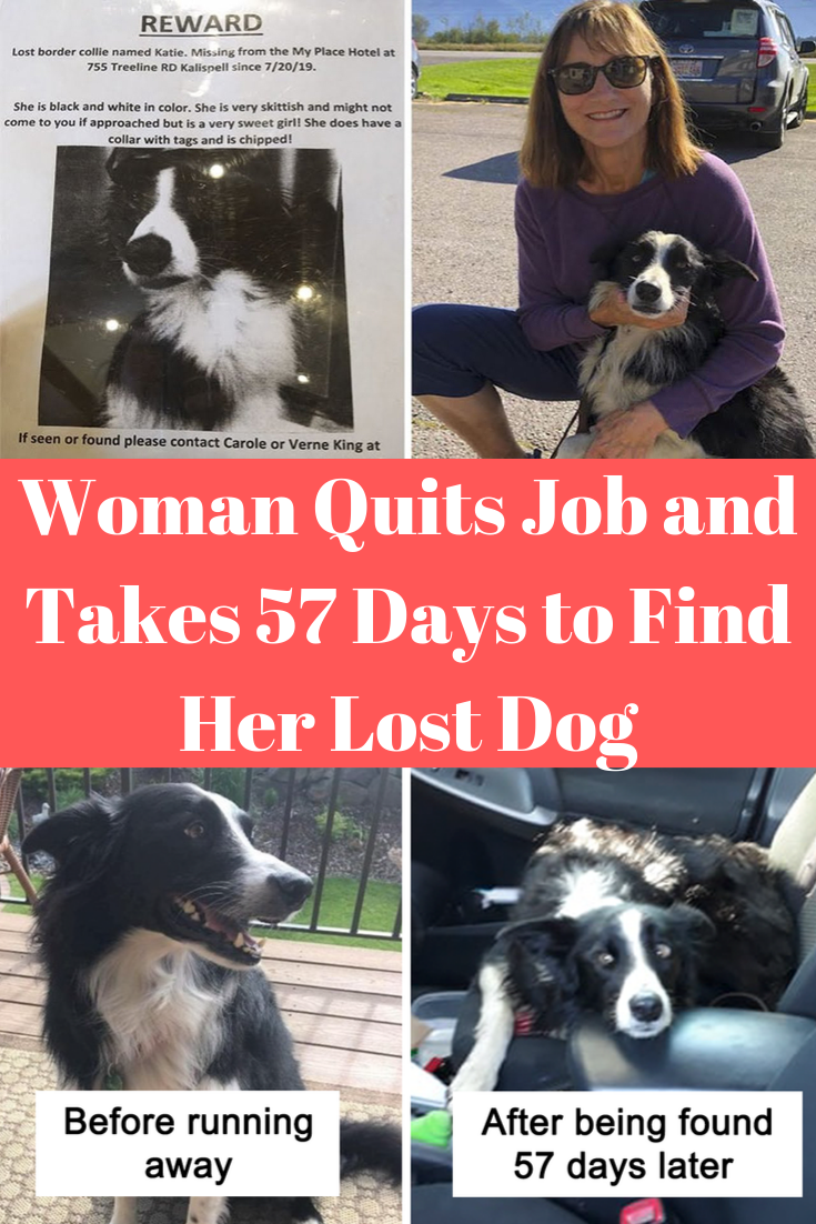 Woman Quits Job And Takes 57 Days To Find Her Lost Dog Losing A Dog Quitting Job Funny Babies