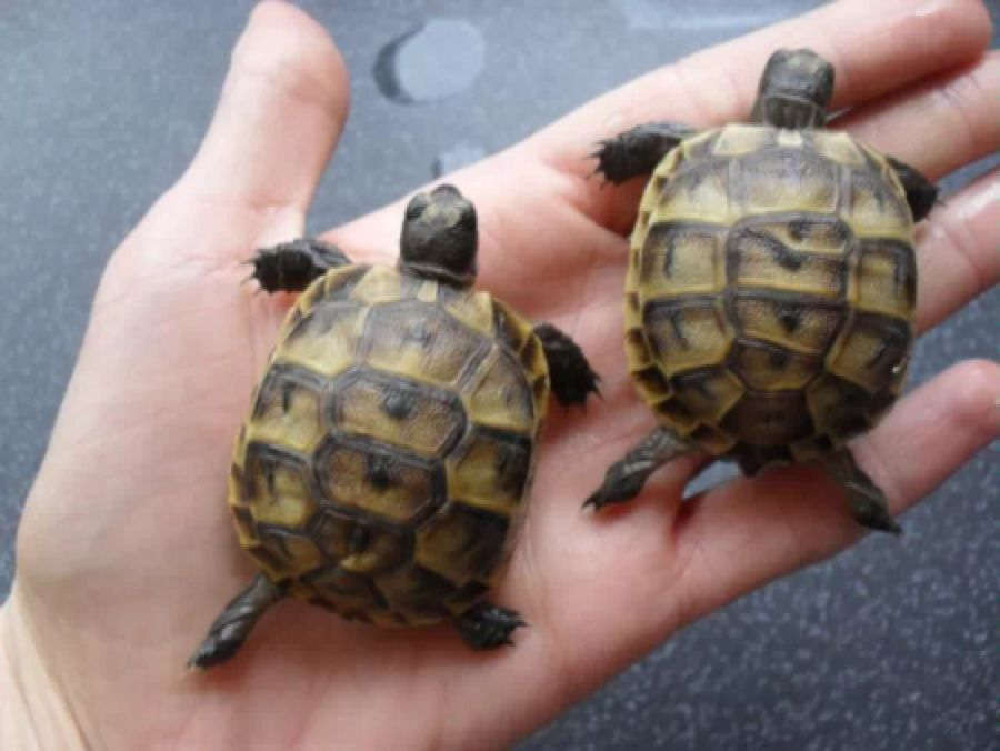 Pin by Laura Smiffy on FavThings Tortoise, Sulcata tortoise