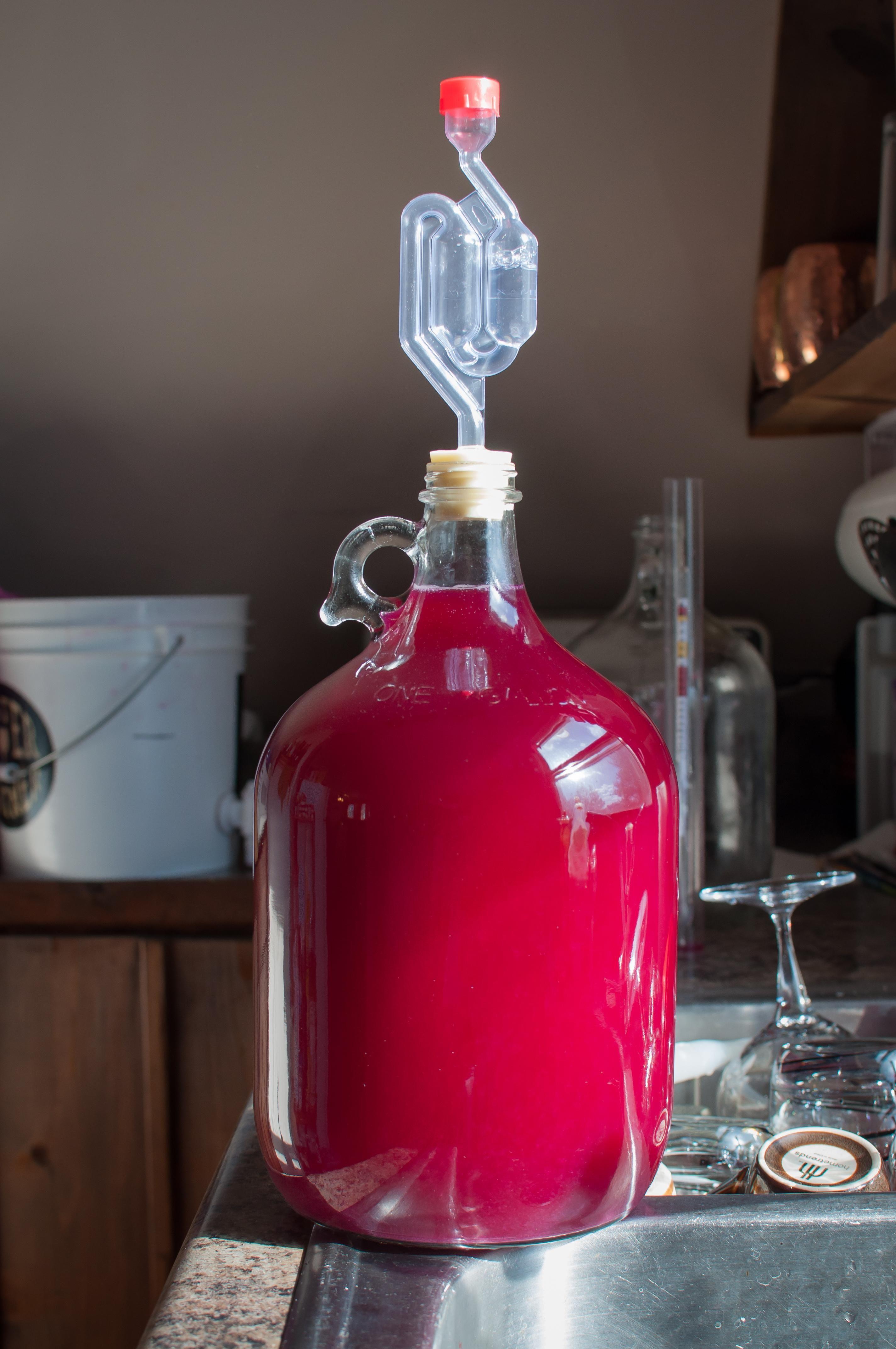 First Prickly Pear Wine Winemaking Wine Winelover Qanda Winery Winelife Winetasting Step Winewednesday Home Pear Wine Apple Wine Homemade Wine Making