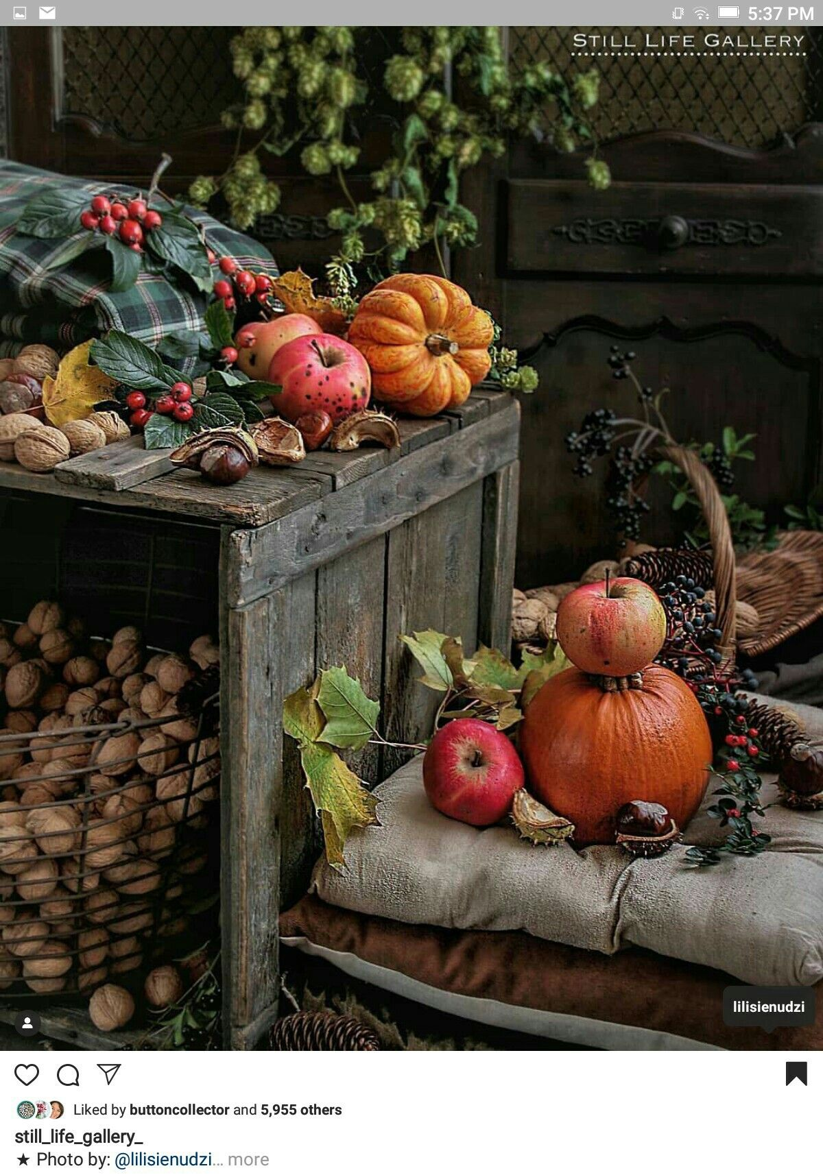 Pin by Yonnie Smith on Fall, Halloween and Thanksgiving