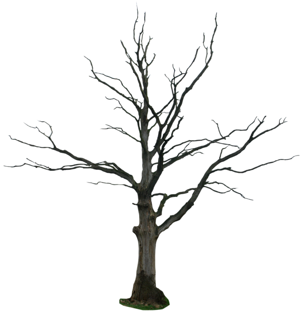 Google Image Result For Http Fc02 Deviantart Net Fs70 I 2011 152 9 3 Dead Tree Png By Gd08 D3hs9tf Png Tree Drawing Winter Trees Black And White Art Drawing