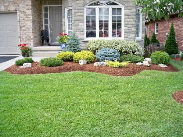 evergreen shrubs for landscaping   Swerving garden bed with ...