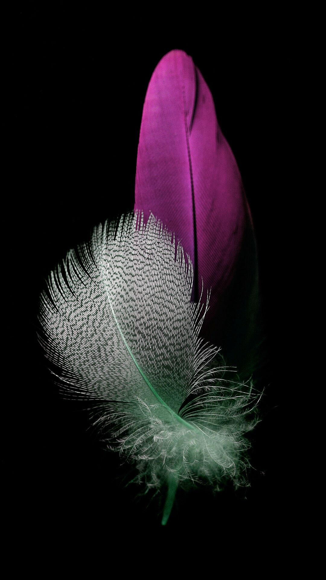 awesome colored feathers wallpaper - photo #31