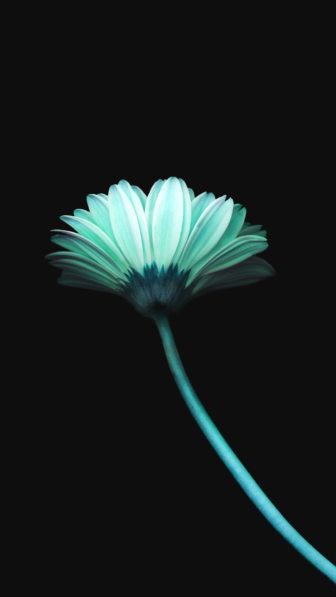 Lonely Flower Dark Blue Simple Minimal Art IPhone 7 Wallpaper