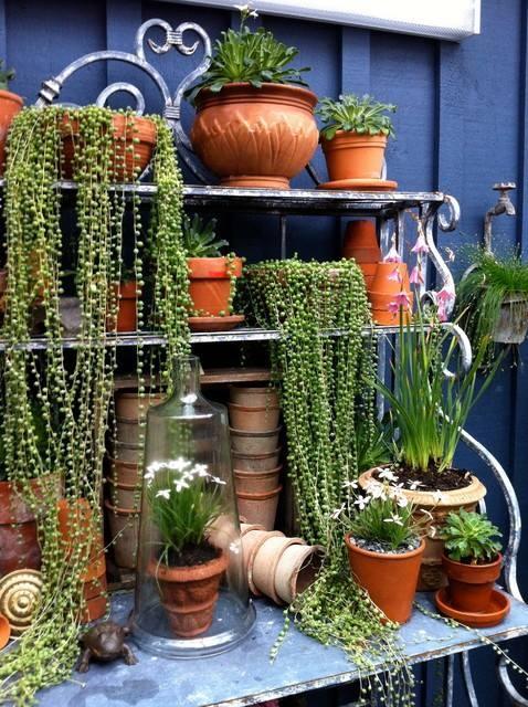 Garden ideas also succulents pinterest pot decoration rh