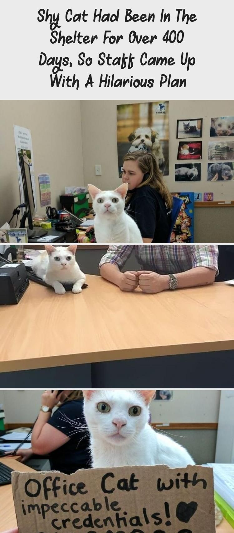 Shy Cat Had Been In The Shelter For Over 400 Days So Staff Came Up With A Hilarious Plan