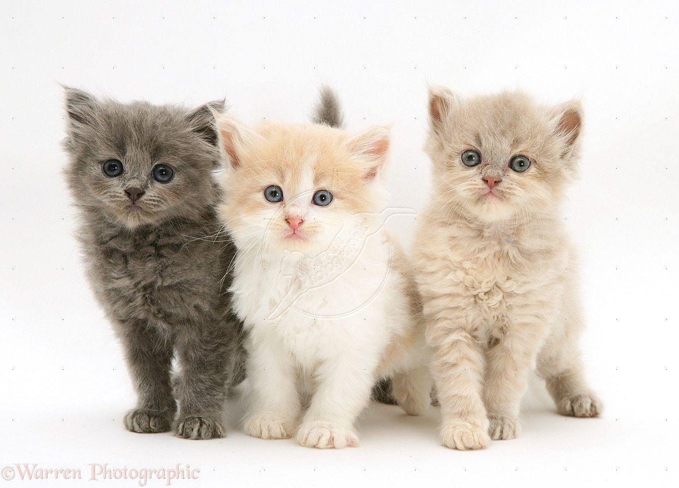 3 Little Kittens Kittens Cutest Cute Baby Cats Baby Cats