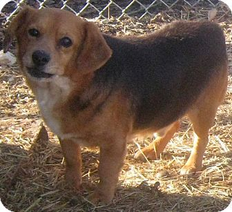 Pin By Brenda Hinckley On Rescue Me Ohio Pets Dachshund Mix Dogs