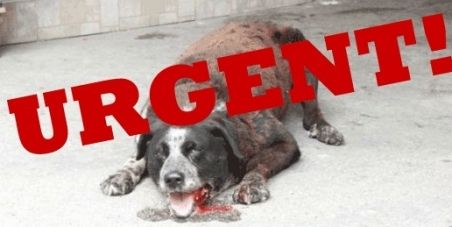 MAY DAY - MAY DAY -  Please sign and share this petition we need still 1.000 signatures  Bosnien!!! STOP der Hundetötungen