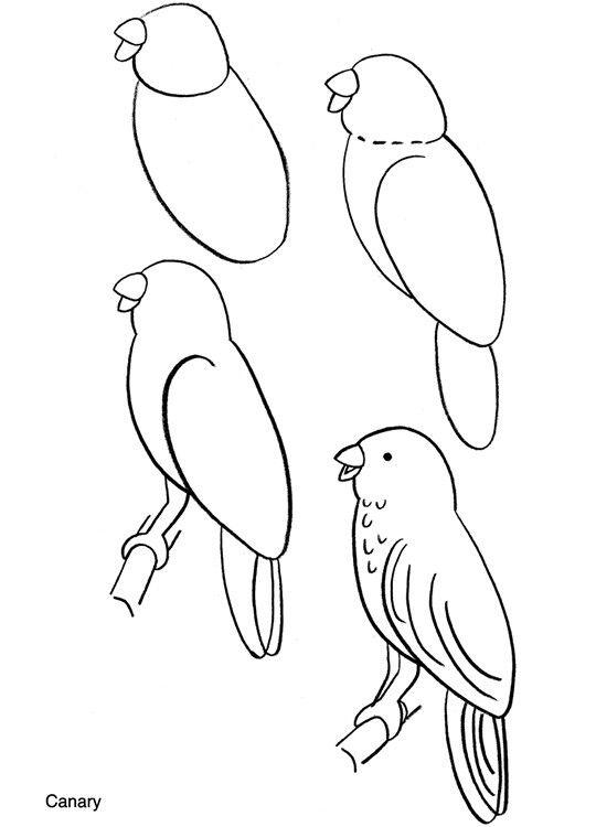 Pin De Susan Carrell En How To Draw Como Dibujar Aves Como Dibujar Animales Faciles Dibujo De Venado