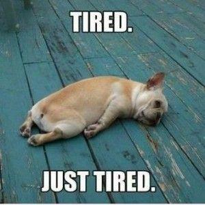 Funny Tired Dog Piyo Workout Piyo Chalene Johnson