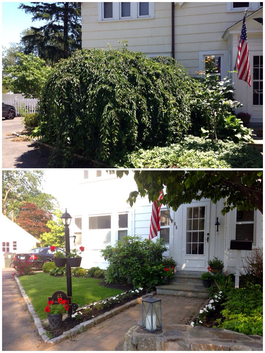 Before and after updated front landscaping painted for Low maintenance plants for front yard
