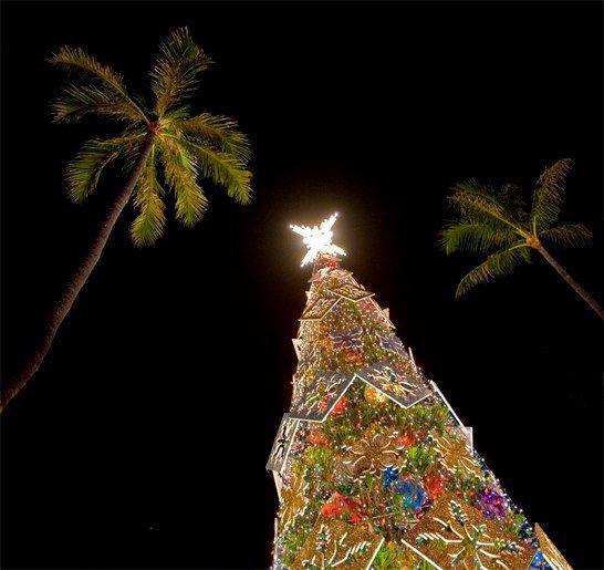 christmas tree in hawaii
