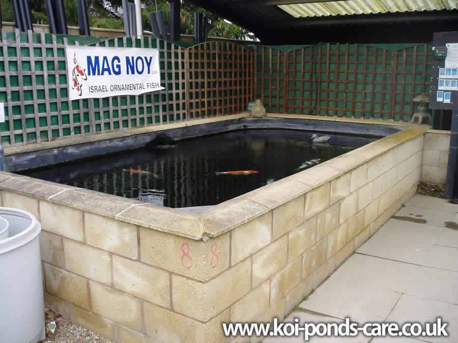 Koi pond pond pinterest pond koi and pond water for Concrete koi pond design