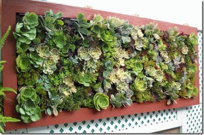 Immagine di http://www.soloecologia.it/wp-content/uploads/2014/03/giardino-verticale-piante-grasse.gif.