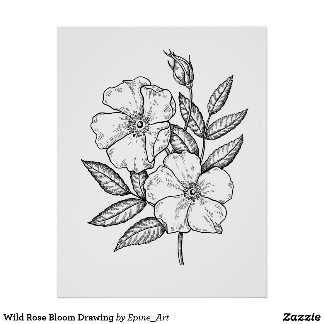 Wild Rose Bloom Drawing Poster Floral