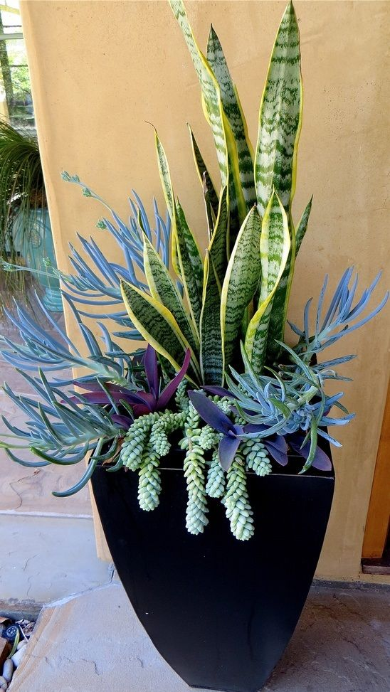 Sanseveria as the vertical element, Purple Heart (Setcresea), Senecio and Burro's Tail draping over the sides