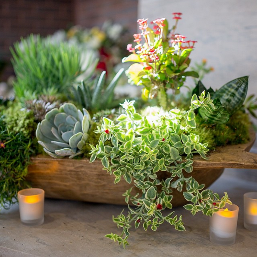 Bowl Decoration Ideas Pottery Barn  Succulents In Dough Bowl Centerpiece  Centerpieces