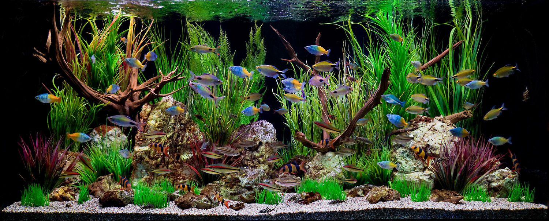 Cool Freshwater Tank Tropical Fish Tanks Fresh Water Fish Tank Tropical Aquarium