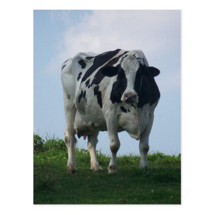 Vermont Black and White Dairy Cow Postcard - animal gift ideas animals and pets diy customize
