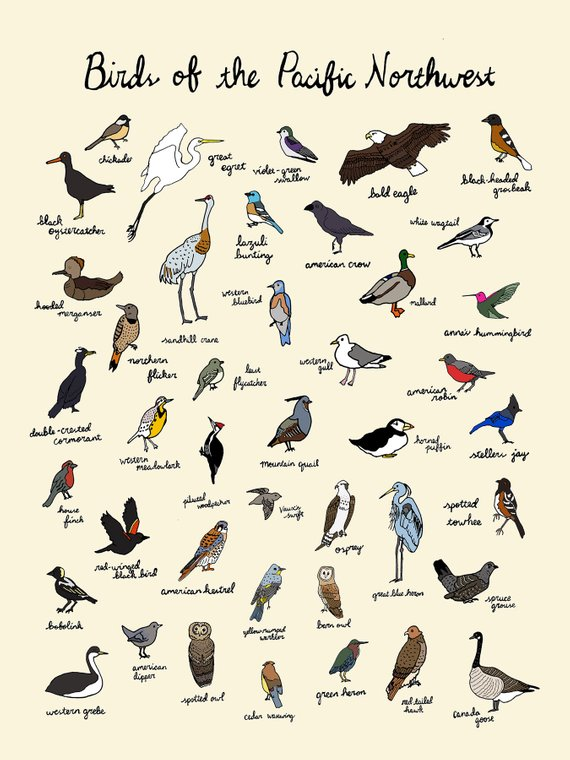 Birds of the Pacific Northwest Print - 9x12 Oregon Washington Nature Art