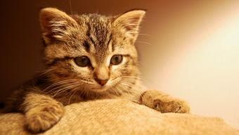 Lisa Zhang On Cute Cat Wallpaper Kittens Cutest Cute Cats