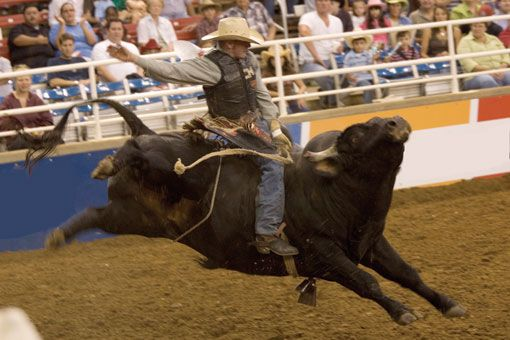 Rodeo In Fort Worth Texas One Day To See Where My Dad