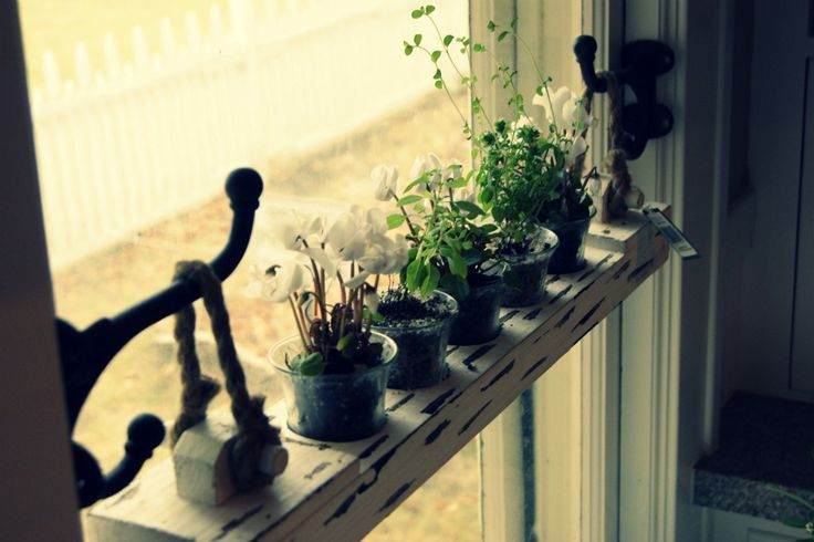 easily removable hanging window shelf. Love this. Hang between cabinets by kitchen window, grow herbs.