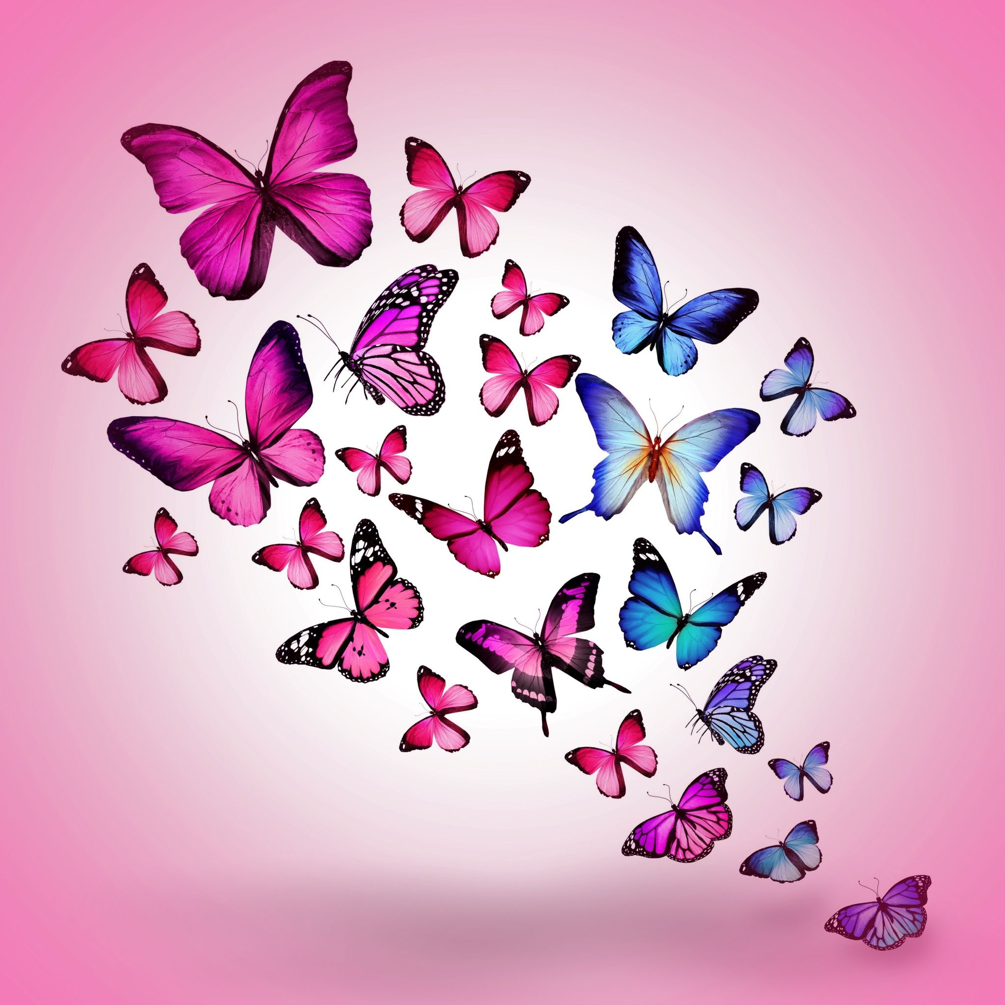 2048x2048 wallpaper butterfly drawing flying colorful background pink