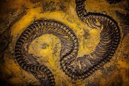 Pr historische Fossil Hintergrund Lizenzfreie Bilder