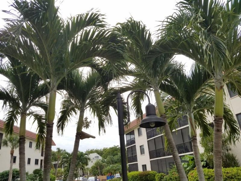 Pin by Sandalfoot Condos 4A1, 2A3 & 4 on Sandalfoot