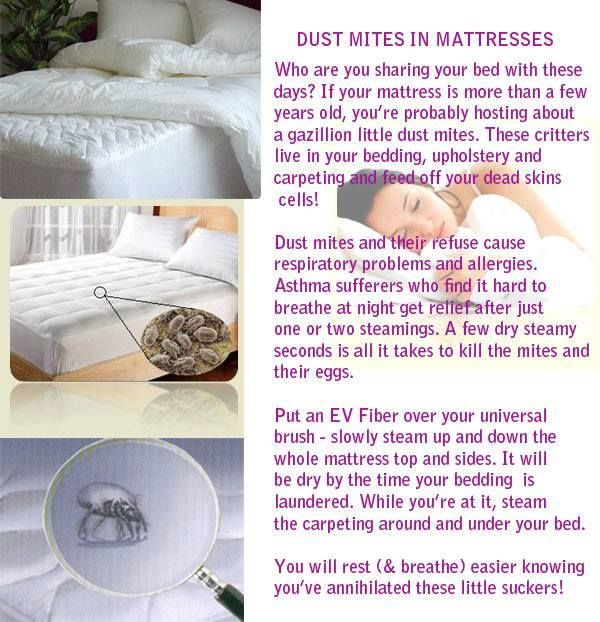 Dust Mites In Mattresses With Images