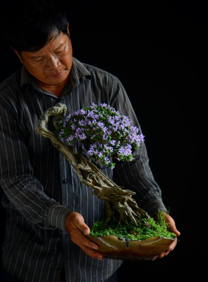 Pin di luca crisafulli su oggetti del desiderio for Alberelli da giardino fioriti