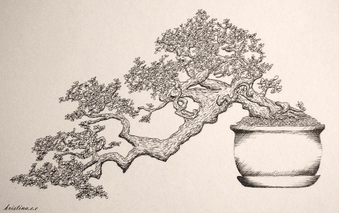 #Bonsai #bonsai trees drawing #drawing #Tree Bonsai tree drawing        Bonsai tree drawing