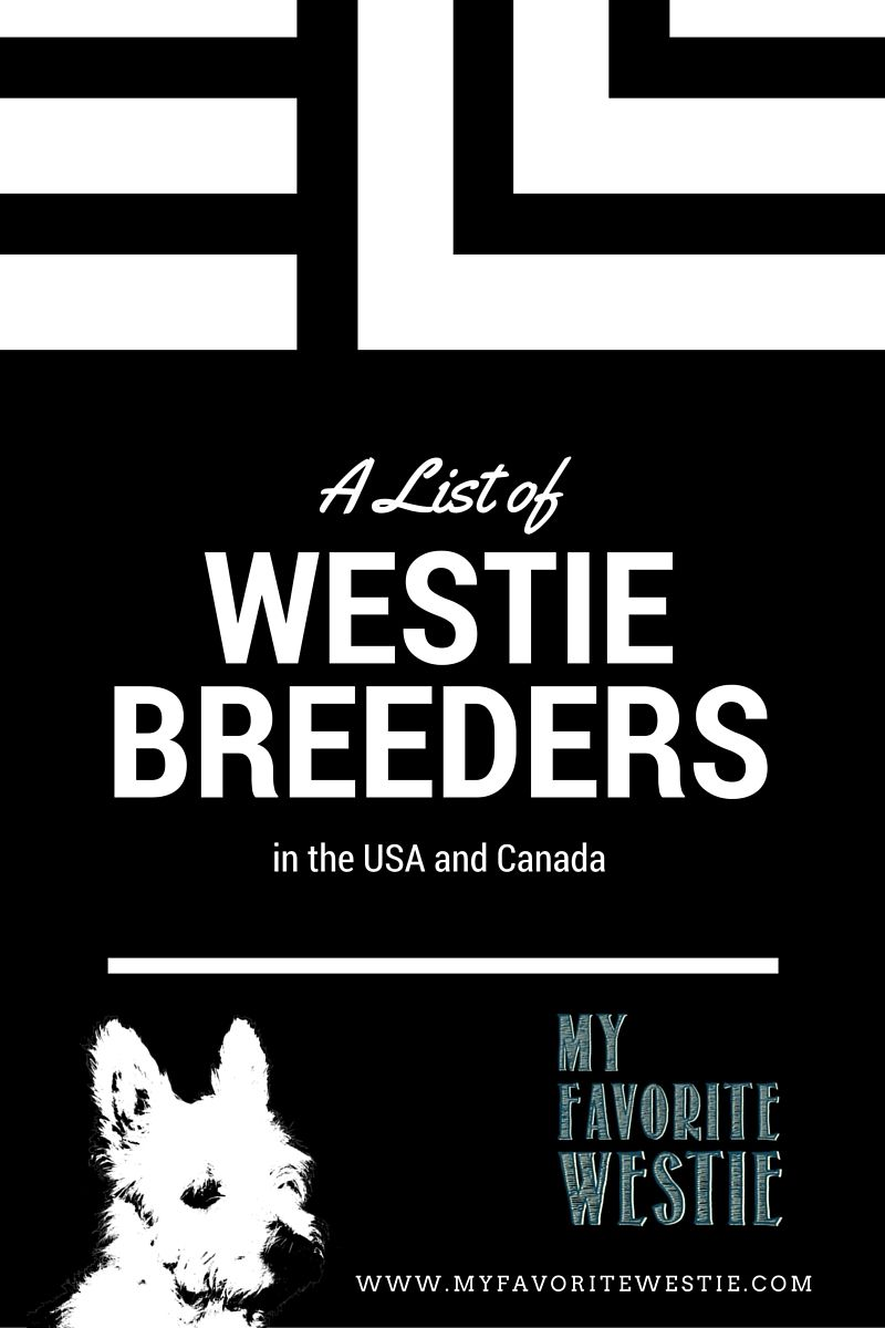 Here is a list of West Highland White Terrier Breeders in the US and
