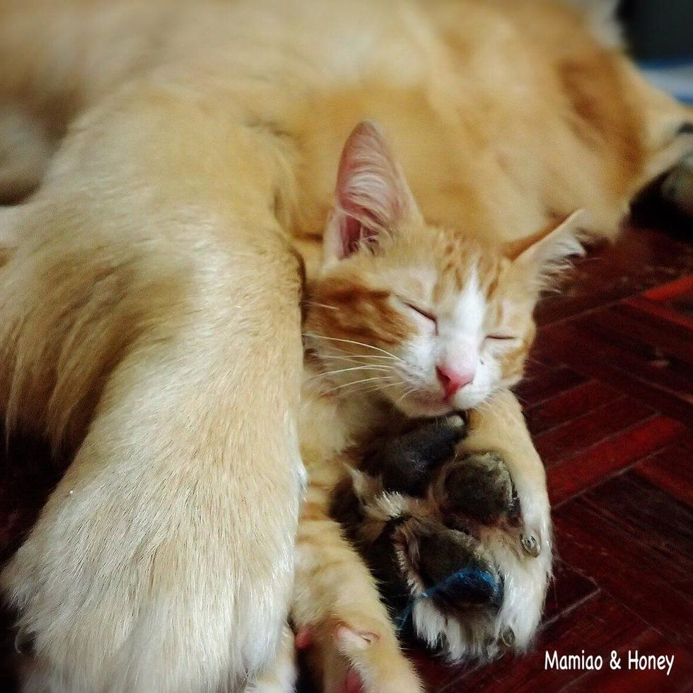 A Tiny Ginger Kitten With An Injured Tail Was Found By A Kind Hearted Man In Thailand He Took The Kitten Home So He Woul Cats Kittens And Puppies Baby Animals