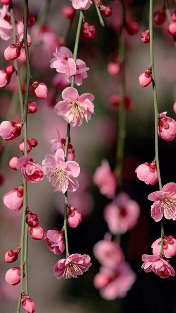 15 Vertical Flower Wallpapers Papel Pintado Flores Fondos De Pantalla De Primavera Fondo De Pantalla Flor Rosa