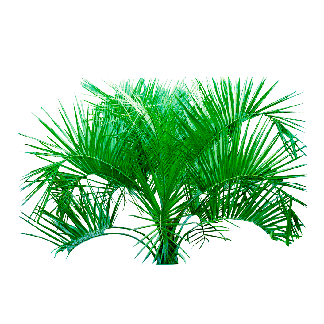 Free download palm png plants hd transparent background