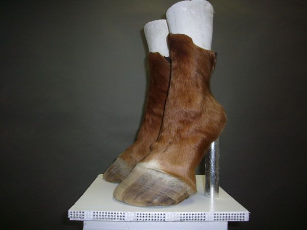 What? Hoof boots?