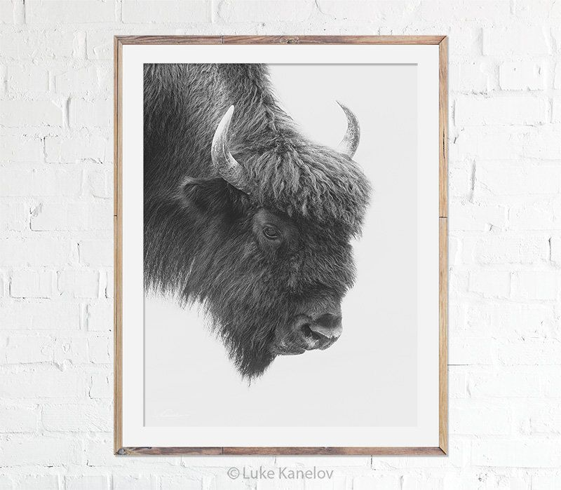 Photo of Buffalo Print, Bison Art Poster, Fine Art Print, Black and White, Wildlife, Photography, Home Decor, Animal, Wall Art, Nursery Decor