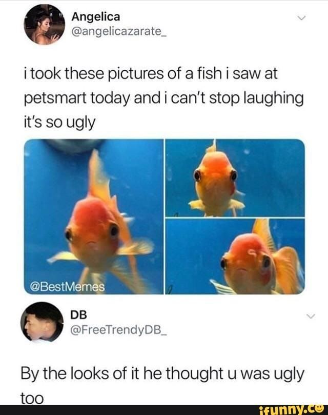 I took these pictures of a fish i saw at petsmart today and i can't stop laughing it's so ugly By the looks of it he thought u was ugly too - )