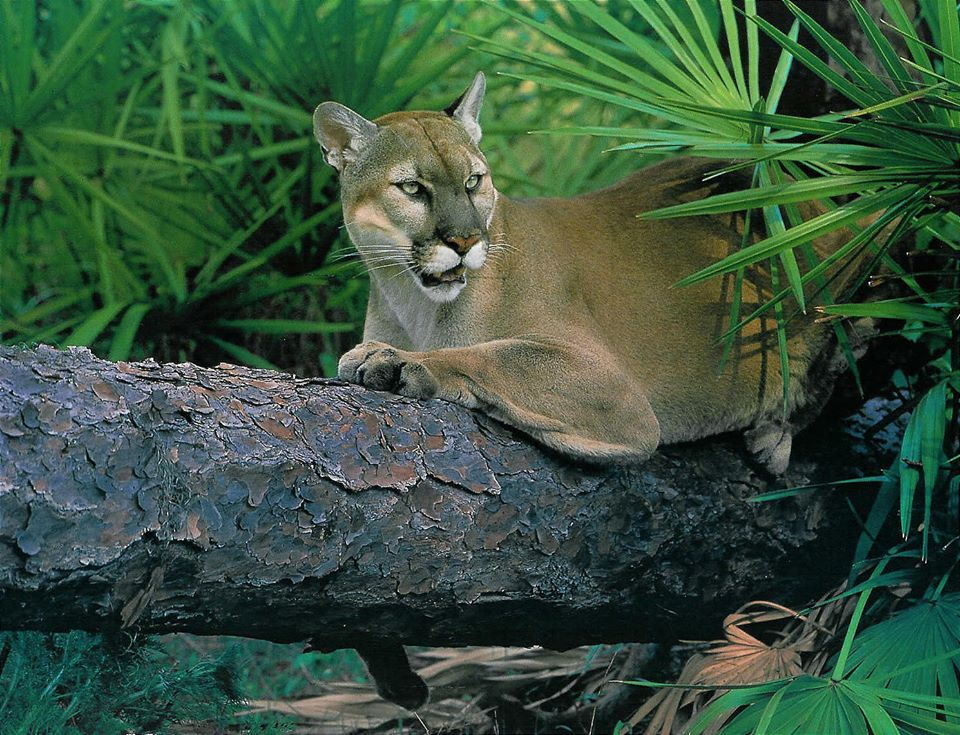 Let's work together to make sure Florida Panthers have the