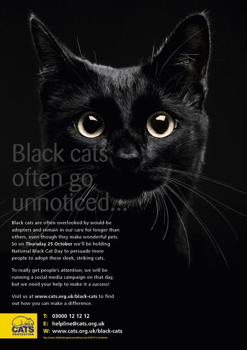 At Risk Black Cat We Adopted One August 17th And The Month Of October It S An Awareness Month For Black Anima National Black Cat Day Black Cat Day Black Cat