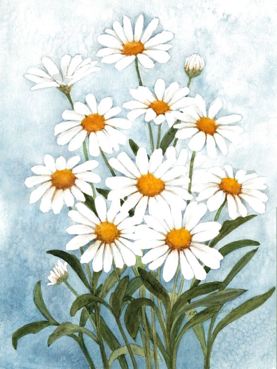 White Daisies Watercolor Painting Reproduction by Wandas Watercolors -  White Daisies Watercolor Painting Reproduction by Wanda's Watercolors  - #AbstractPaintings #ArtHistory #daisies #painting #reproduction #wanda #Wandas #watercolor #WatercolorPainting #watercolors #white