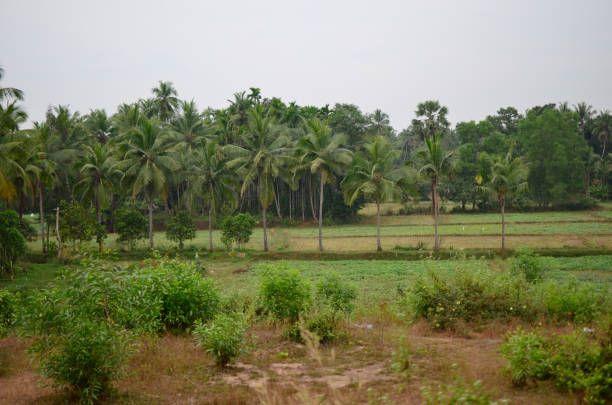 beautiful landscape of rural india