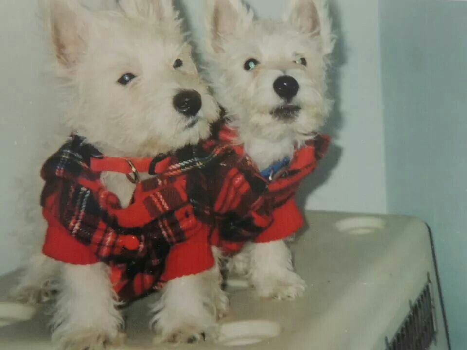 Marco and Polo (TBT) when they were 3 months old... from a FB ...